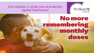 Proheart 12 Heartworm