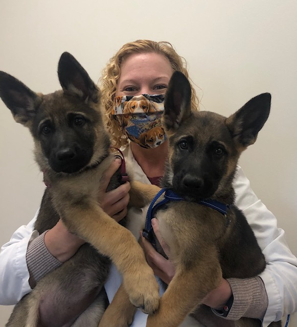 stringtown-animal-hospital-dr-scott-with-two-puppy-german-shepherds
