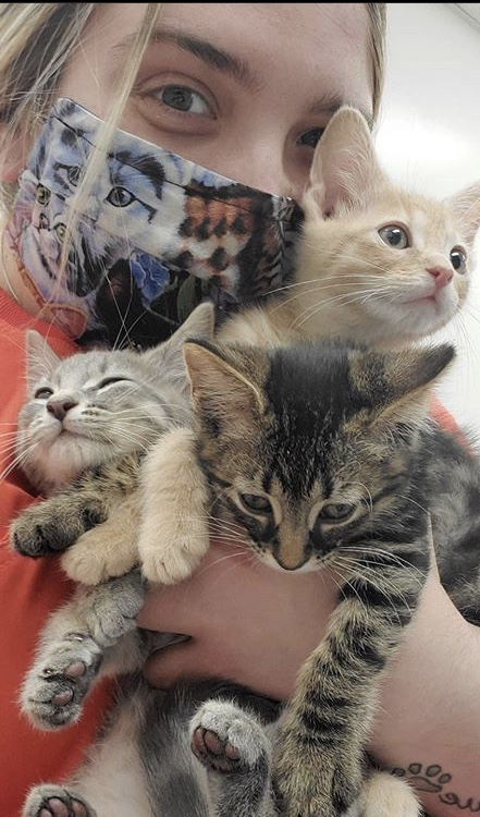 stringtown-animal-hospital-three-adorable-kittens-with-masked-vet-tech