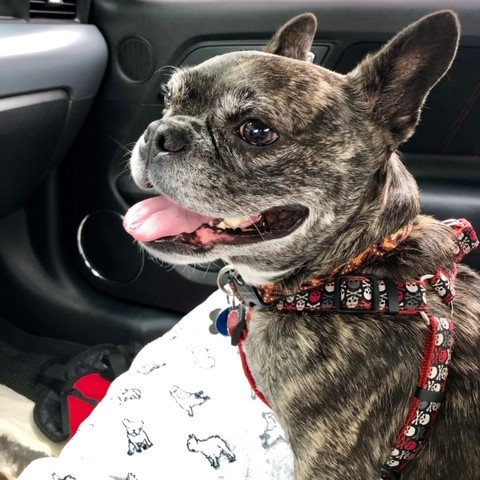 Dog in car waiting for appointment